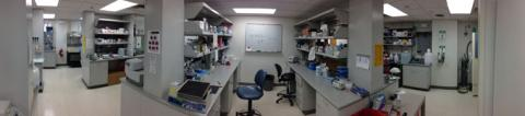 Webbie Lab Panoramic